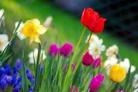 IMG Spring Flowers